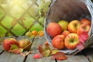 Basket of apples and autumn leaves